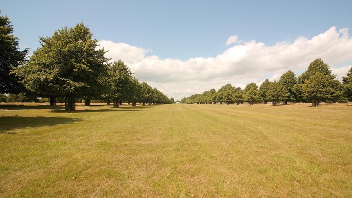 Bushy Park - Avenue of Lime Trees