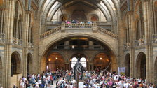 The Natural History Museum - The Central Hall from the back of the building