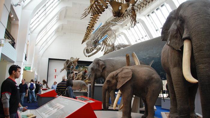 Natural History Musem - (c) Natural History Musem