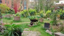 Phoenix Garden