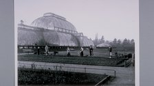 Palm House, Courtesy of the Director and Trustees of the Royal Botanic Gardens, Kew