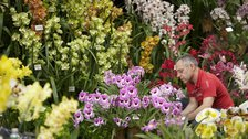 RHS London Orchid Show and Plant Fair by RHS