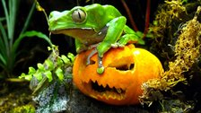 Boo at the Zoo - Image copyright: Grant Kother  by Grant Kother