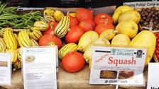Halloween Wild Food Market
