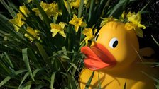 Giant Easter Egg Duck Hunt