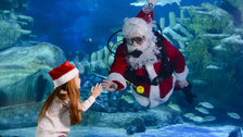 Santa Swims at Sea Life London Aquarium
