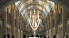 July in London 2017 - Hintze Hall Blue Whale (c) 2015 Casson Mann