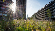 Open Garden Squares Weekend - Beech Gardens - Barbican Estate by Diana Jarvis