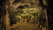 Backyard Cinema: The Winter Night Garden