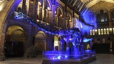 Jurassic Park at the Natural History Museum