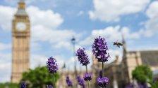 London National Park City Week - Photo credit: Luke Massey