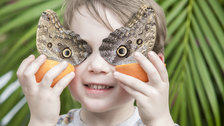 Sensational Butterflies by The Trustees of the Natural History Museum, London
