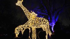 Christmas at London Zoo