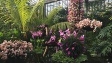 Kew Orchid Festival