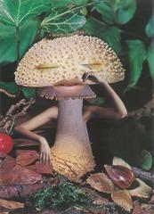 Mushrooms: The Art, Design And Future Of Fungi - Seana Gavin, 'Mindful Mushroom', courtesy of the artist