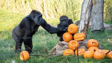Halloween at London Zoo by ZSL