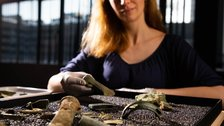 Havering Hoard: A Bronze Age Mystery by David Parry / PA Wire